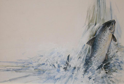 A Salmon Climbing a Waterfall