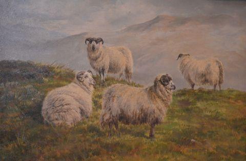 Sheep on a Moorland