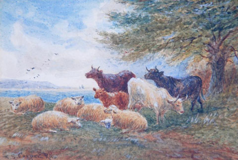 Sheep and Shorthorns