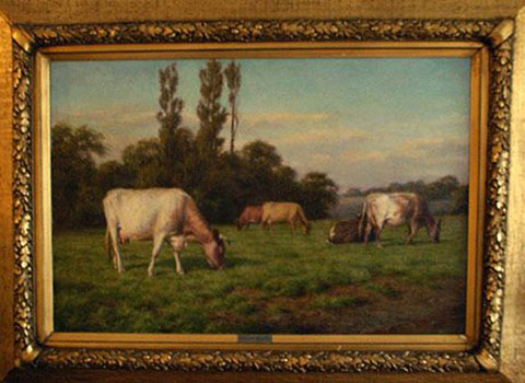 Shorthorn cattle in Summer Pastures - Yorkshire