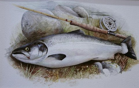 Salmon and Rod