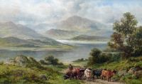 Droving Highland Cattle